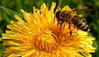 От 20 ноември пчеларите кандидатстват за помощ de minimis
