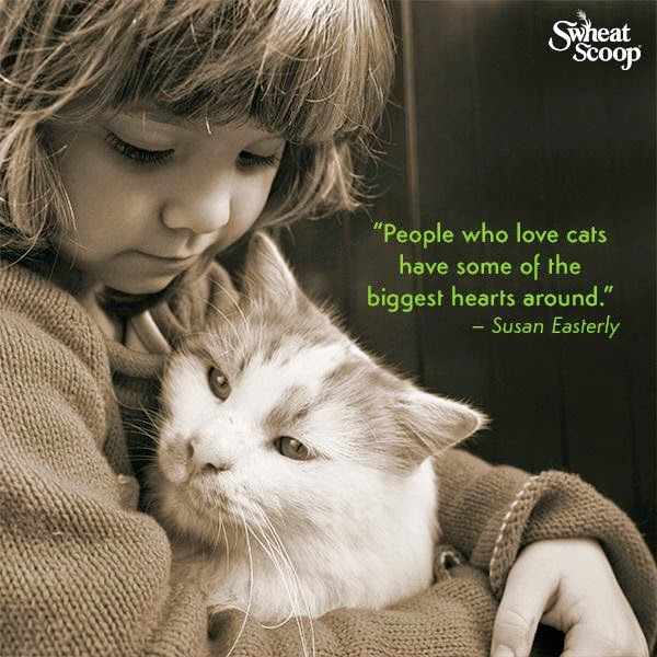 for the love of cats...