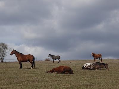 Sudety-konie