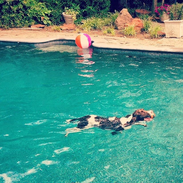 Pup in the Pool