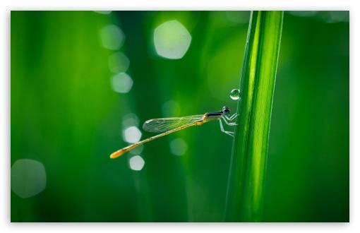 Akhlak Kepada Lingkungan~BloggerZar