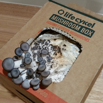 eight acres - how to use a mushroom kit to grow your own oyster mushrooms