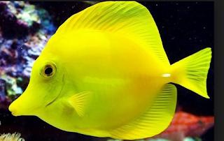 t menyenangkan bukan memelihara ikan hias air maritim d Kabar Terbaru- IKAN HIAS AIR LAUT