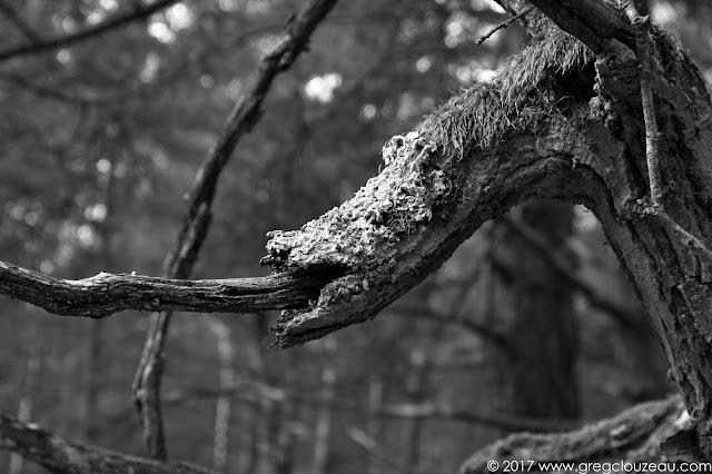 La bouche du dragon, Franchard, Fontainebleau