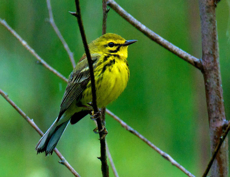 Naturally digital: 2013: Week 22 - Nesting birds and Cicadas