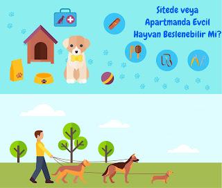 Site veya Apartmanda Evcil Hayvan Beslemek