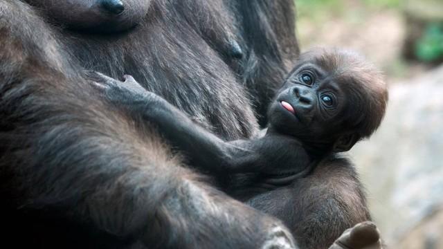 Bronx Zoo | Zoológico do Bronx em Nova York