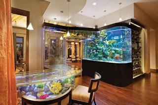 Acqua Liana Aquarium