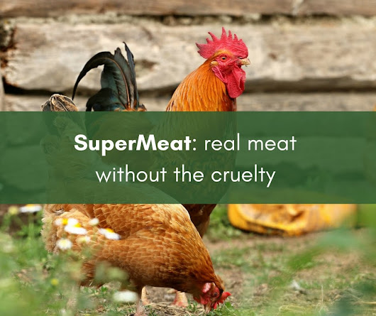 SuperMeat: Real meat without the cruelty