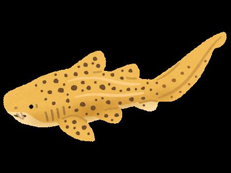 トラフザメのイラスト