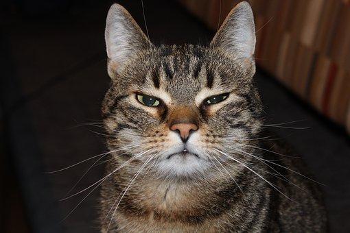 Kenapa Kucing Tidak Berselera Makan Bisa Jadi Inilah Penyebabnya