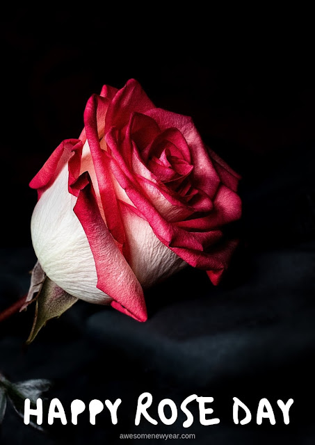 Beautiful and Unique Rose Day Images for lover,husband & boyfriend