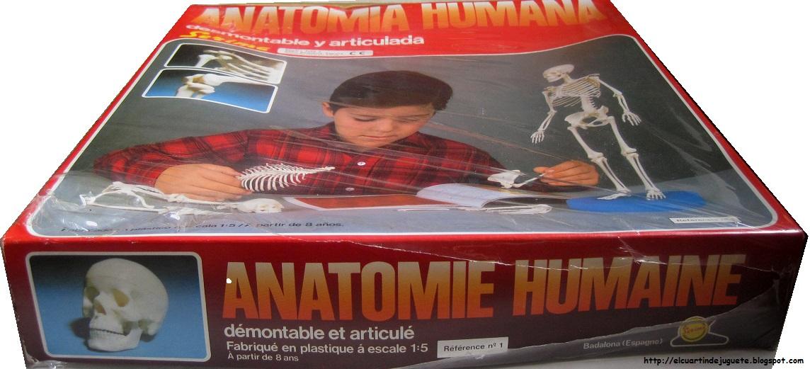 El cuartin de juguete: Anatomía humana Serima