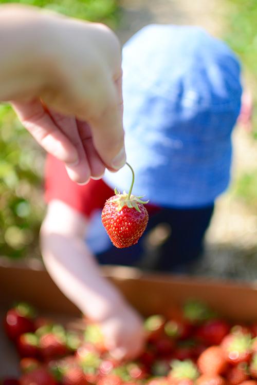 Strawberry | My Darling Days