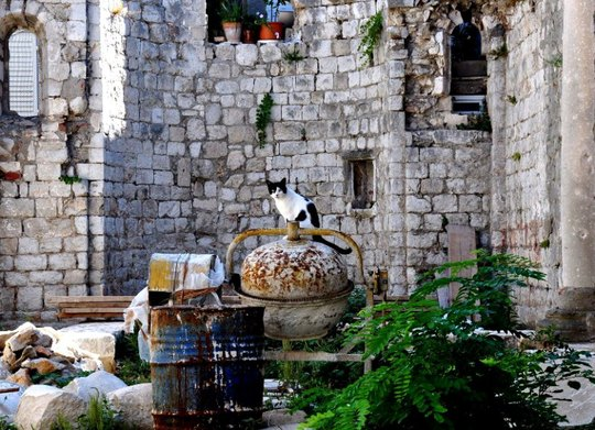 Street cat of Dubrovnik Croatia