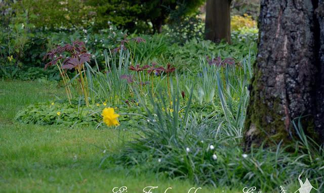 Ein Sparziergang im Aprilgarten