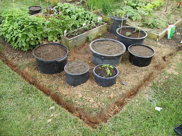 Container Gardening Vegetable Garden