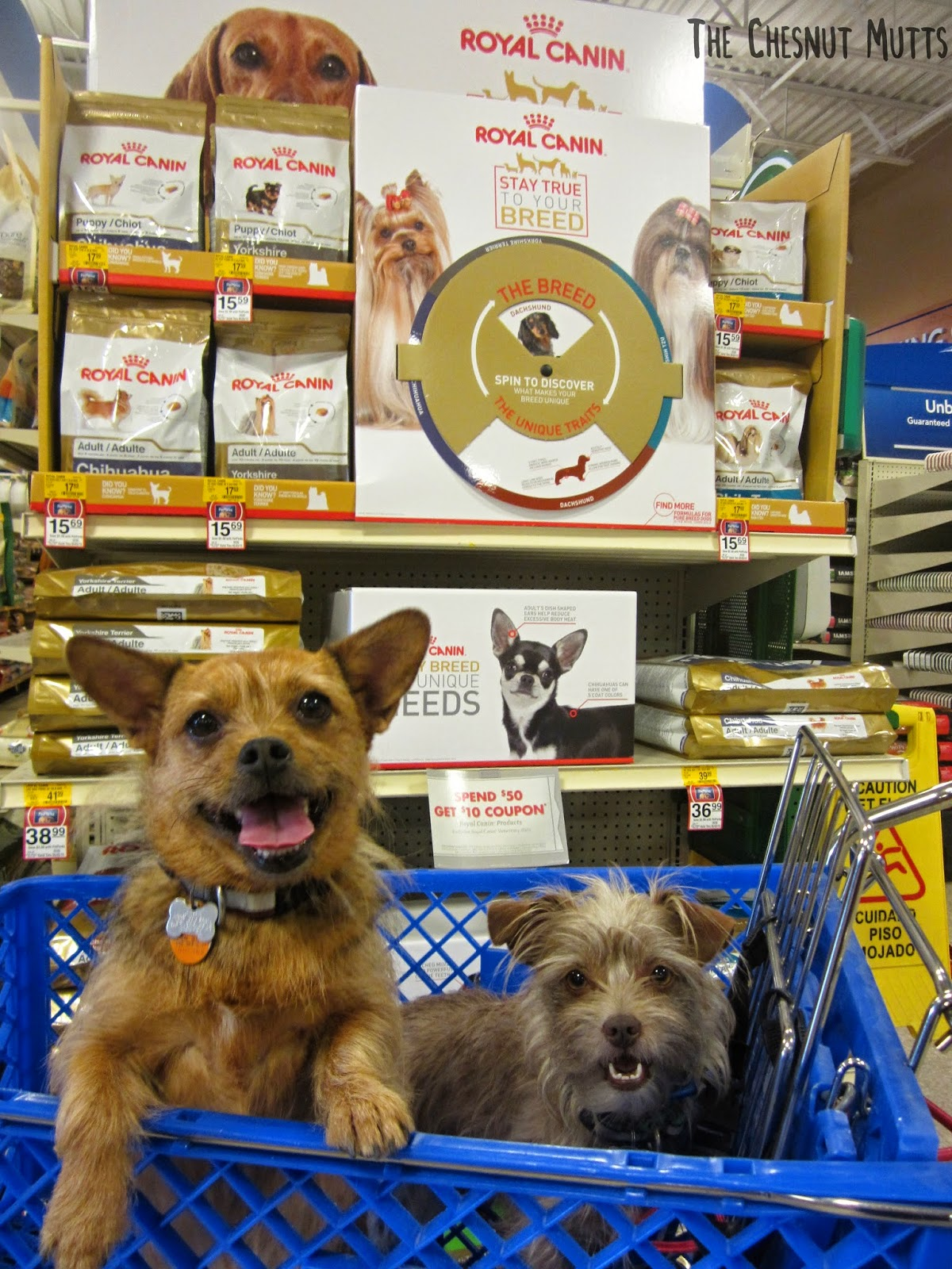 Jada and Bailey in a Petsmart cart in front of Royal Canin Dog Food