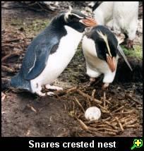 spesies pinguin yang masih eksis ketika ini 17 Jenis Penguin yang Ada di Dunia ini