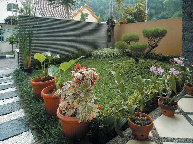 tanaman depan rumah minimalis lahan sempit