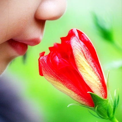 Image Result For Home Flower