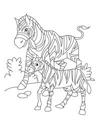Cute Baby Zebras With Mom Coloring Pages