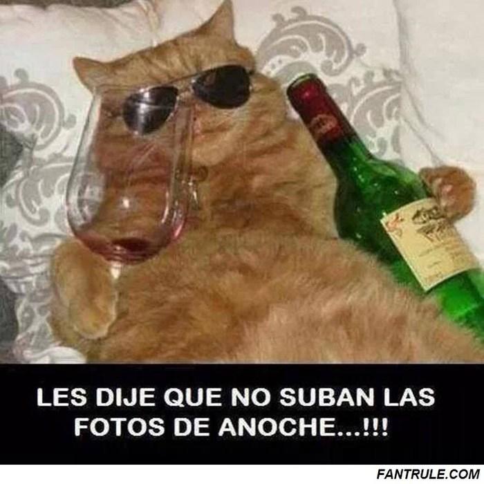 imagenes animales graciosos perros gatos foto