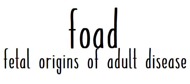 FOAD, czyli o tym, dlaczego zdrowie matki i jej dieta w okresie okołoowulacyjnym i okołoimplantacyjnym będzie kształtować Twoje życie?