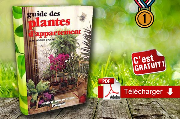 Guide des plantes d'appartement