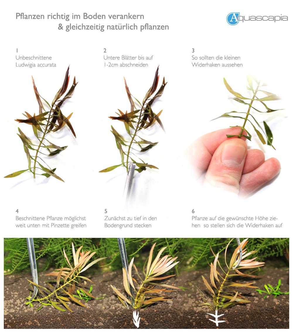 baum richtig pflanzen