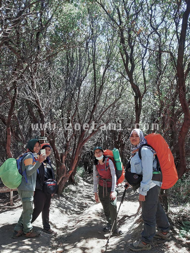 Info Pendakian Gunung Papandayan Terbaik