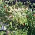 Mengasah Kecerdasan Naturalis Anak dengan Berkebun