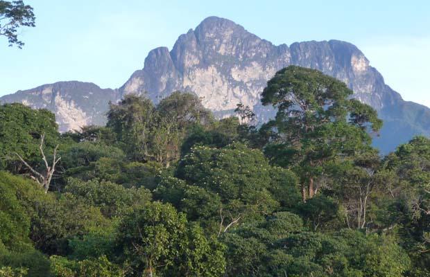 Importância da Floresta Equatorial