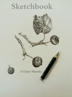 graphite crab apple