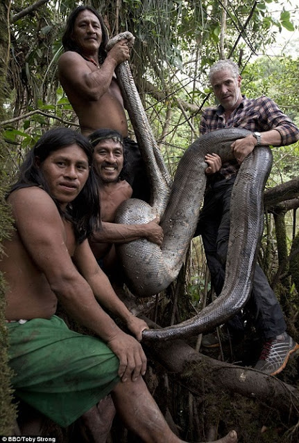 Wow! The Longest Snake in the World Has Been Discovered Deep in the Amazon Jungle (Photos)