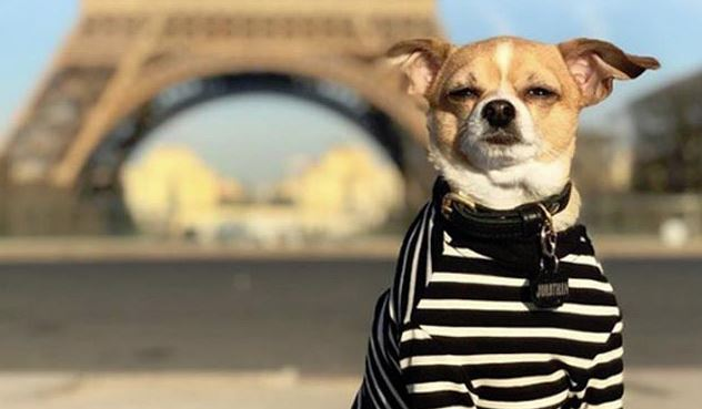 Chihuahua travels world after avoiding death in animal shelter
