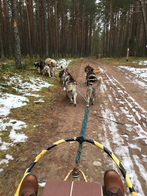 Dog sledding riga latvia discover latvia tours