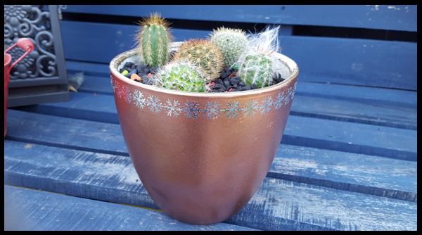 A cluster of Cactus in a repurposed pot