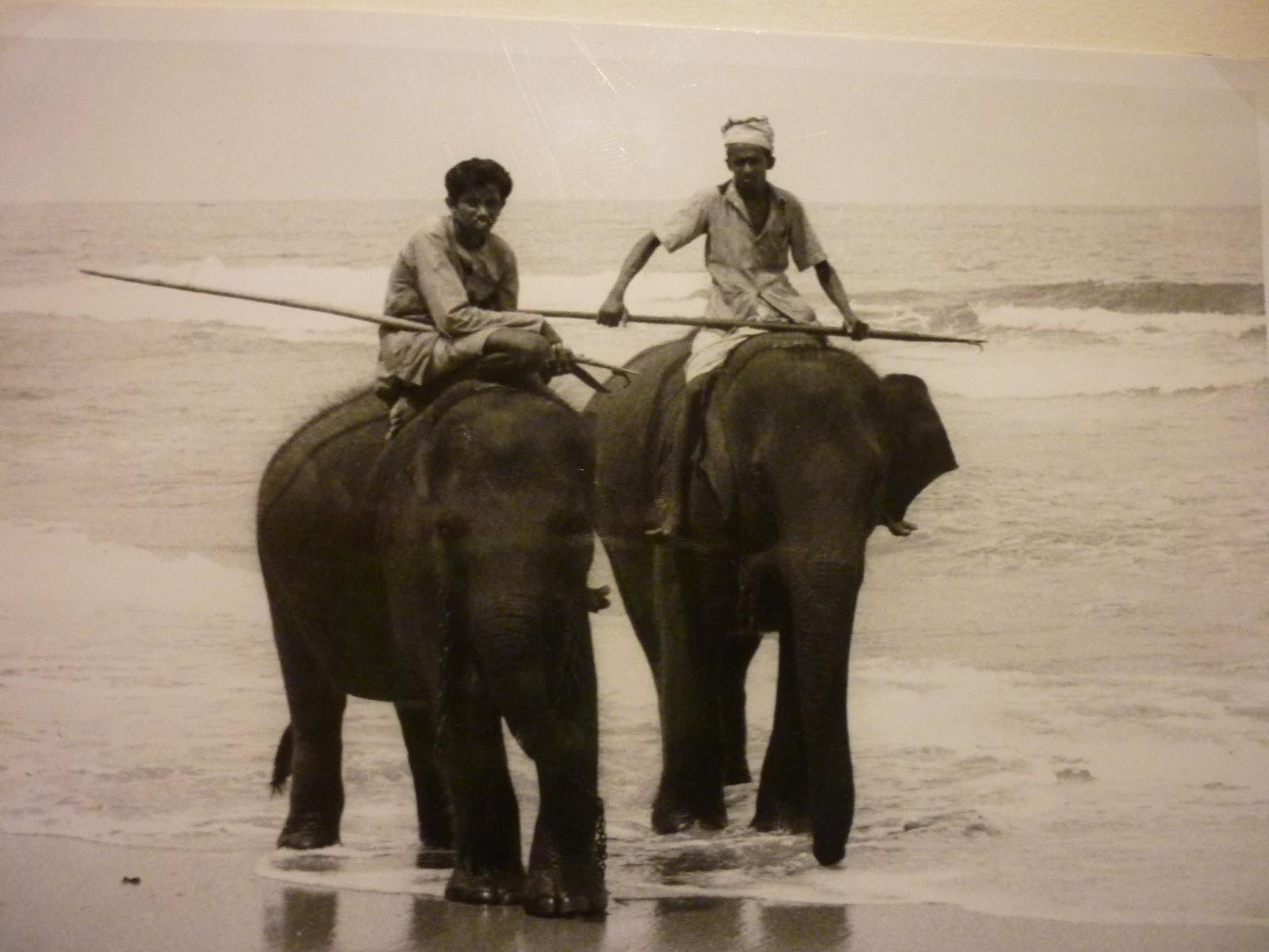 Elephant En Inde Signification medieval meets world: 2013