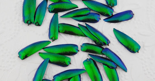 Now Available: Jewel Beetle Wings, Undrilled and Double Drilled