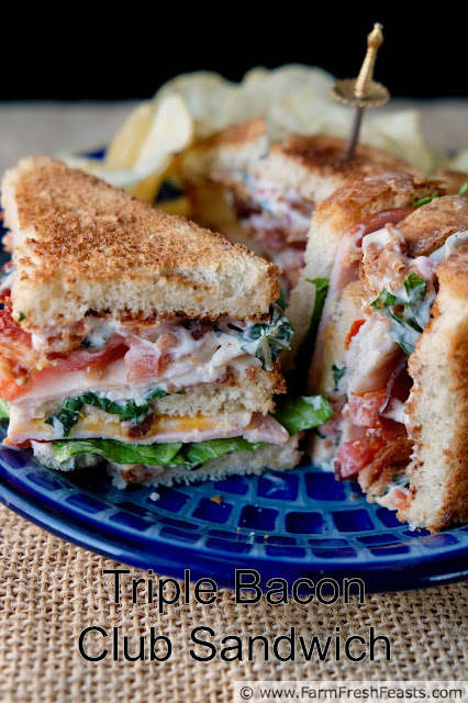 This triple decker sandwich is packed with bacon! Starting with crisp bacon strips, tender slices of Canadian bacon, and an amazing Bacon Basil Tomato Mayo spread--this restaurant quality recipe is perfect for a game day crowd or a satisfying solo lunch with a good book.