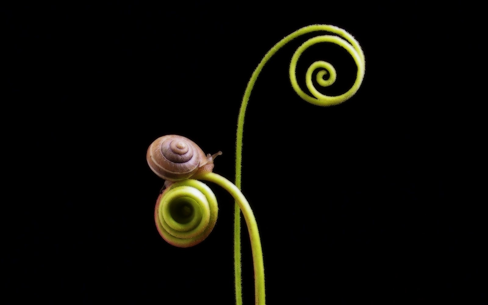 Snails Wallpapers - Pets Cute and Docile