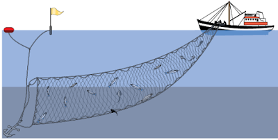 Cara Menggunakan Alat Tangkap Gill Net