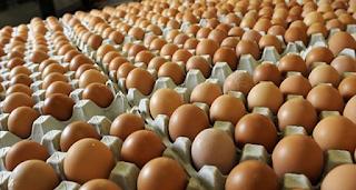 info harga telur hari ini