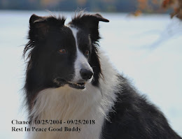 Our Border Collie Chance 10/25/2004- 9/25/2018