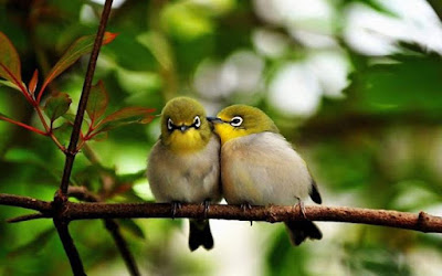 Resultado de imagem para passarinho amor