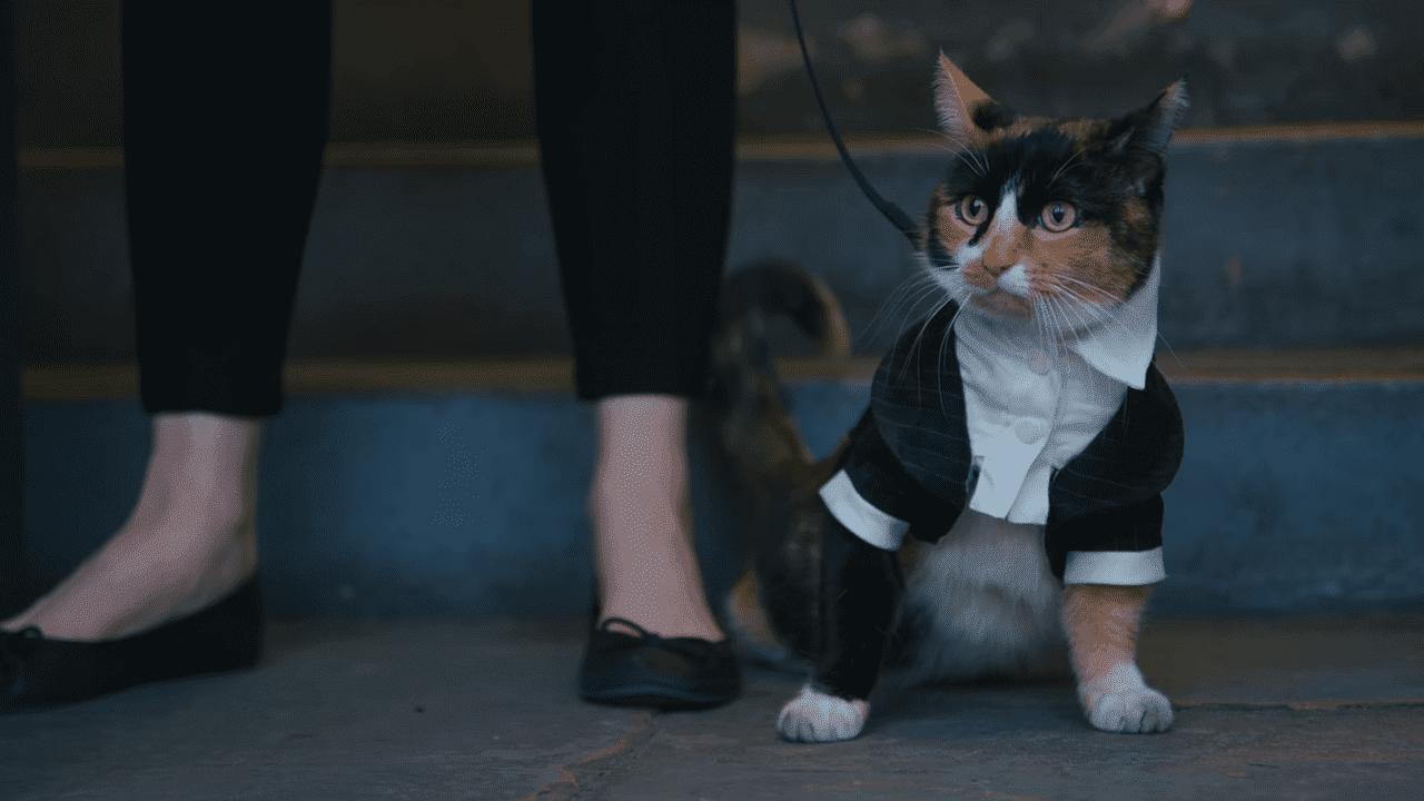 Secret Service Cat : ネコのシークレット・サービスの命がけの活躍を迷信にもとづいて描いたコメディのショート・フィルム ! !