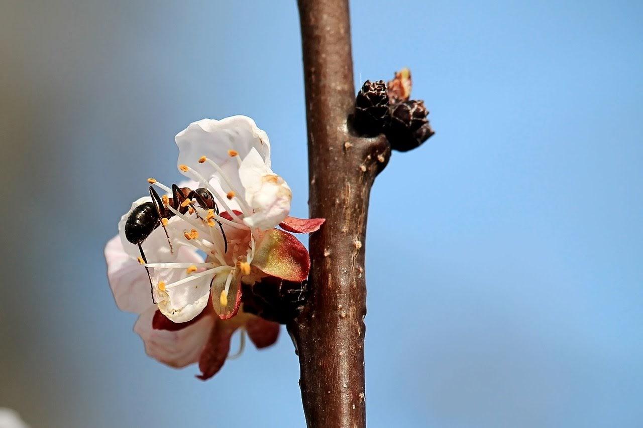 صورة نملة تتسلق زهرة بيضاء - اجمل واحلى صور الطبيعة الجميلة والخلابة في العالم