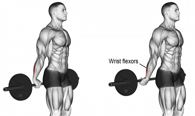 Method Behind The Back Barbell Wrist Curl