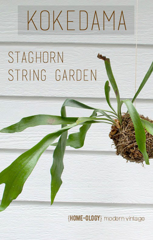 Make a Kokedama String Garden